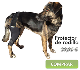 Knee brace for dogs