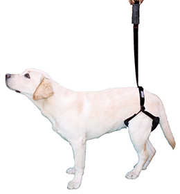 Harness support pack for dogs