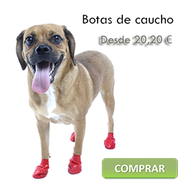 Rubber boots for dogs