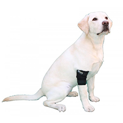 Canine elbow brace pack
