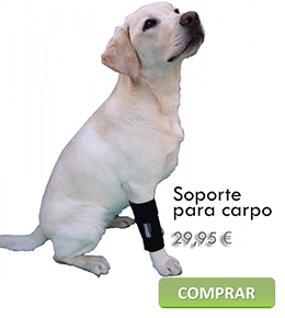 Carpal support for dogs